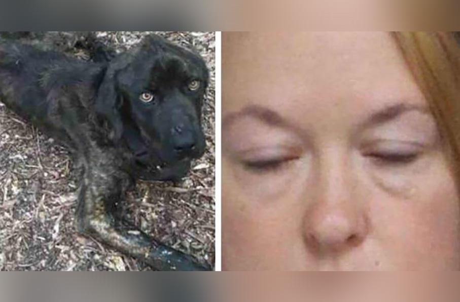 Mujer maltrataba a su perro en venganza de su novio