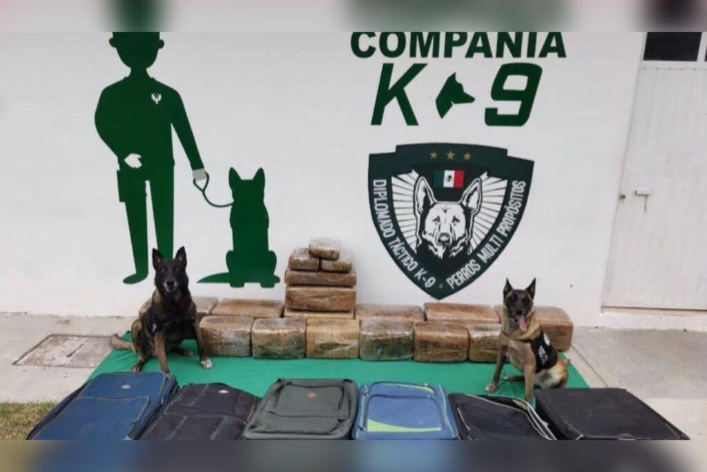 Perros entrenados